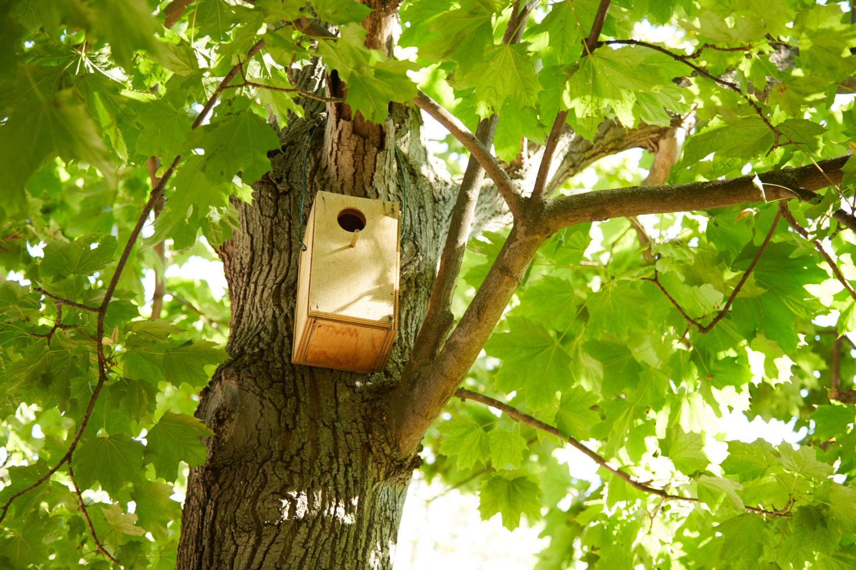 Un nid pour les oiseaux © Marine Saiah